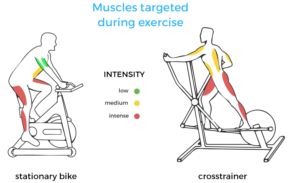 An Illustration of which muscles do the Elliptical and the Exercise Bike work