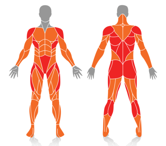 Other Muscles Worked by jumping jacks