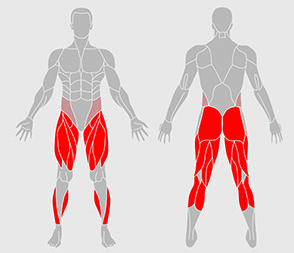 What Muscles Do Squats Target