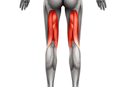 Hamstrings are one of the muscle areas worked by Hack Squat Machine
