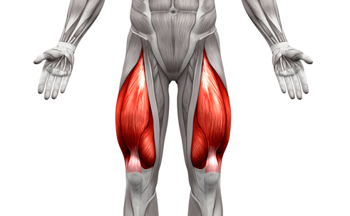 Quadriceps (Quads) are one of the muscle areas worked by Hack Squat Machine
