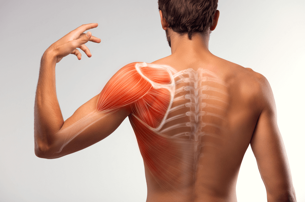 Shoulder muscles are one of the muscles worked by Wall Angles