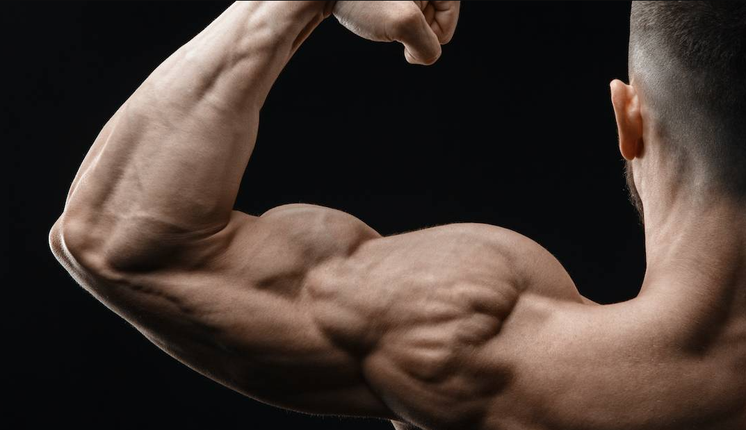 Shoulders are one of the muscle groups Worked by The Military Press