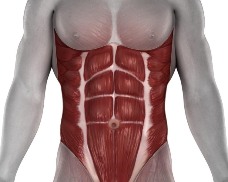 Anatomy of The Abdominals - Is It Even Possible To Get 10-Pack Abs