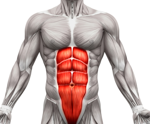 Your Core Muscles are worked by Alternating Dumbbell Presses