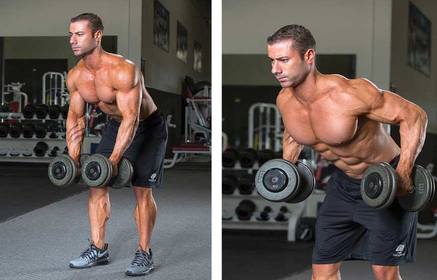 Standing Two-Dumbbell Bent Over Row are part of workout B