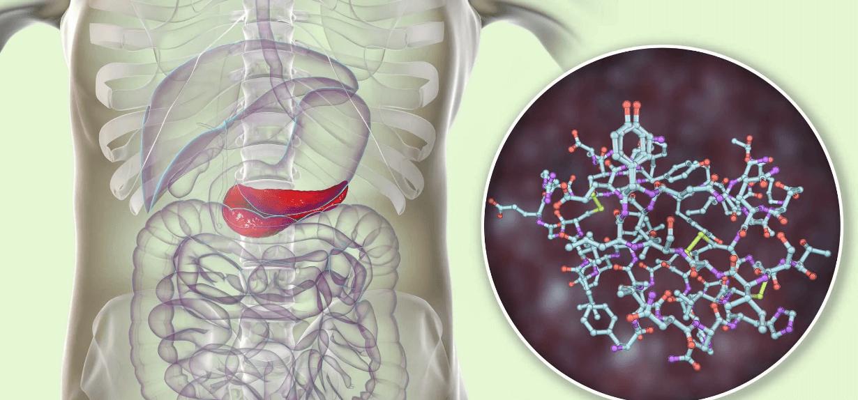 What Changes In Glycogen