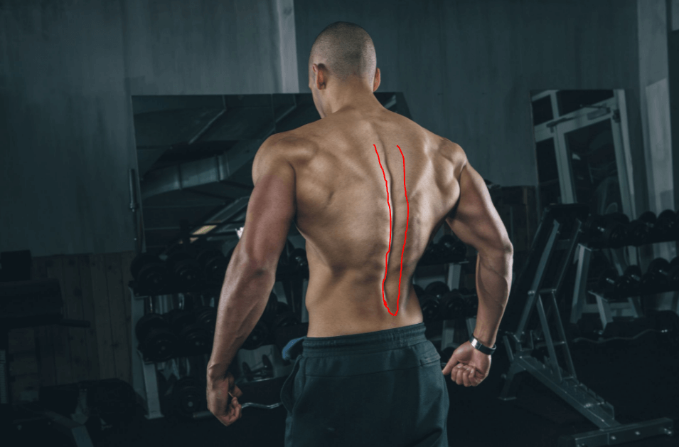 Erector Spinae are some of the main muscles targeted by this workout