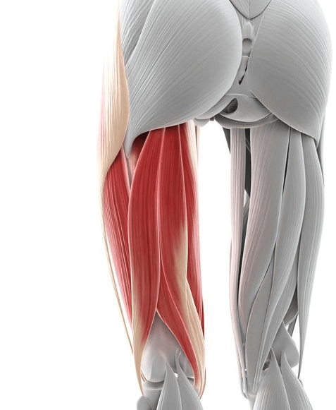 The hamstring is one of the several muscles worked with this exercise